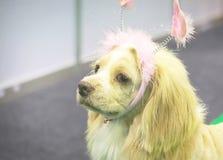 Cão muito bonito Fotos de Stock Royalty Free