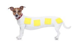 Cão muito longo Foto de Stock