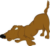 Cão muito malicioso Fotografia de Stock