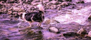 Cão na água, nadada, respingo imagens de stock royalty free