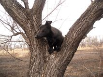 Cão na árvore Foto de Stock Royalty Free