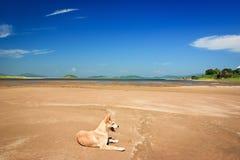 Cão na areia Imagens de Stock Royalty Free