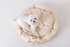 Cão na cama do cão Imagens de Stock Royalty Free