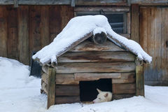 Cão na casota sob a neve imagem de stock