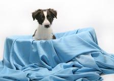 Cão na cesta Imagens de Stock Royalty Free