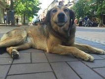 Cão na cidade Fotos de Stock Royalty Free
