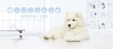 Cão na clínica com ícones veterinários do cuidado, exami veterinário do veterinário imagens de stock