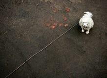 Cão na corrente Fotos de Stock