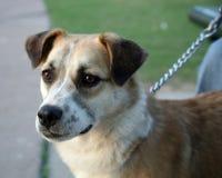 Cão na família Fotos de Stock Royalty Free