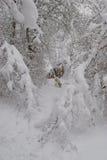 Cão na floresta nevado fotografia de stock royalty free