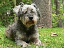 Cão na frente da árvore imagem de stock
