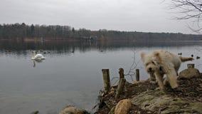 Cão na frente do mar Fotografia de Stock Royalty Free
