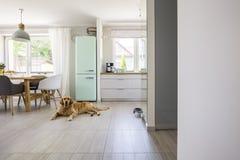 Cão na frente do refrigerador da hortelã no interior espaçoso com a cozinha fotografia de stock royalty free