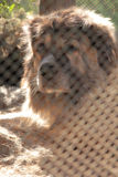 Cão na gaiola Imagem de Stock Royalty Free