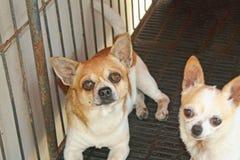 Cão na gaiola, a falta de sentimento da liberdade fotografia de stock royalty free