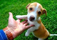 Cão na grama Fotos de Stock