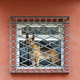 Cão na janela Imagem de Stock Royalty Free