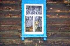 Cão na janela de uma casa de madeira imagens de stock