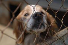 Cão na libra Fotografia de Stock