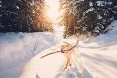 Cão na natureza do inverno imagem de stock royalty free