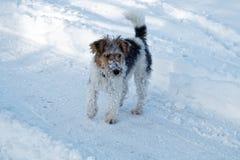 Cão na neve foto de stock royalty free