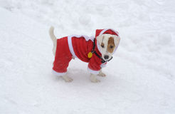Cão na neve com Natal traje o 29 de dezembro de 2014 Fotos de Stock