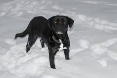 Cão na neve que olha à esquerda foto de stock
