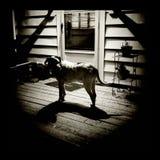 Cão na noite Foto de Stock