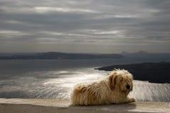 Cão na parede que negligencia o Caldera de Santorini Fotografia de Stock Royalty Free