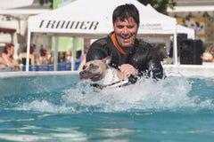 Cão na piscina Imagens de Stock