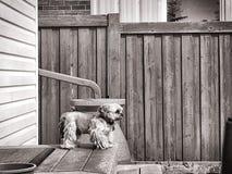 Cão na plataforma Fotos de Stock Royalty Free