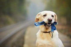 Cão na plataforma railway Fotos de Stock Royalty Free