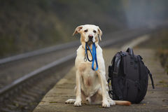 Cão na plataforma railway foto de stock royalty free
