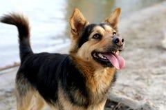 Cão na praia Água e areia no fundo Fotos de Stock