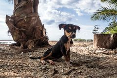 Cão na praia fotos de stock