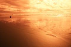 Cão na praia na luz vermelha Imagens de Stock