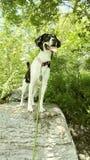 Cão na rocha imagens de stock royalty free