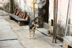Cão na rua chinesa da vila Imagens de Stock