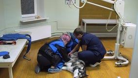 Cão na sala do raio X vídeos de arquivo
