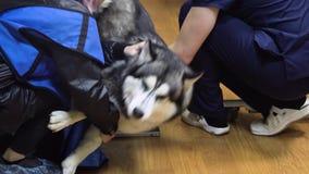 Cão na sala do raio X video estoque