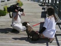 Cão na televisão Fotografia de Stock