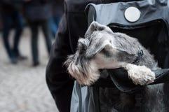 Cão na trouxa na rua fotografia de stock royalty free