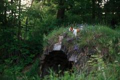 Cão nas flores em um parque na natureza Fotografia de Stock
