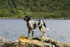 Cão nas rochas Imagens de Stock Royalty Free