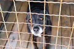 Cão no abrigo animal adoption foto de stock