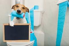 Cão no assento da sanita fotografia de stock royalty free