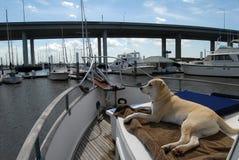 Cão no barco Fotografia de Stock Royalty Free