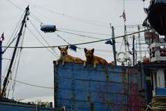 Cão no barco Imagem de Stock Royalty Free