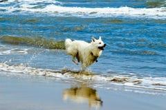 Cão no beira-mar Fotografia de Stock