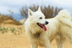 Cão no beira-mar Imagens de Stock Royalty Free